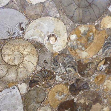 ammonite fossils for walls or countertops interiordesign