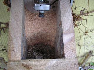 montana wildlife gardener: nesting and nest box camera update