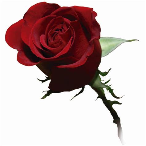 la rossa plinio corr 234 a de oliveira la rosa e l orchidea due tipi