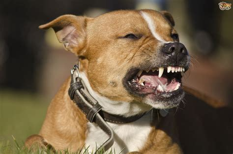 for aggressive dogs tougher sentencing plans for owners of deliberately aggressive dogs pets4homes