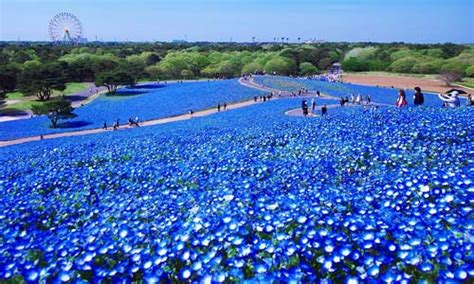 Mawar Laundry By Lautan Biru 7 taman bunga terindah bagaikan di surga kejadian aneh