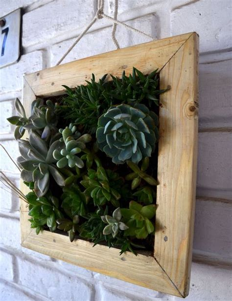 succulent hanging frame   bangalore delivery