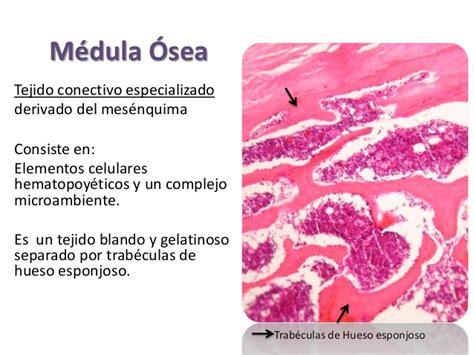 imagenes histologicas pdf histolog 237 a m 233 dula 243 sea y sangre