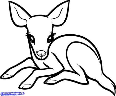 how to a deer simple drawing of a baby how to draw a ba deer ba deer step step forest animals