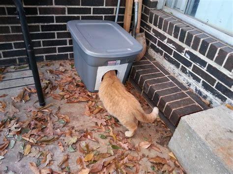 ab wann haben katzen fieber ab wann frieren katzen 6 tipps zum erkennen w 228 rmen