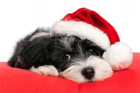 imagenes feliz navidad con perros peligros de la navidad para nuestro perro recomendaciones