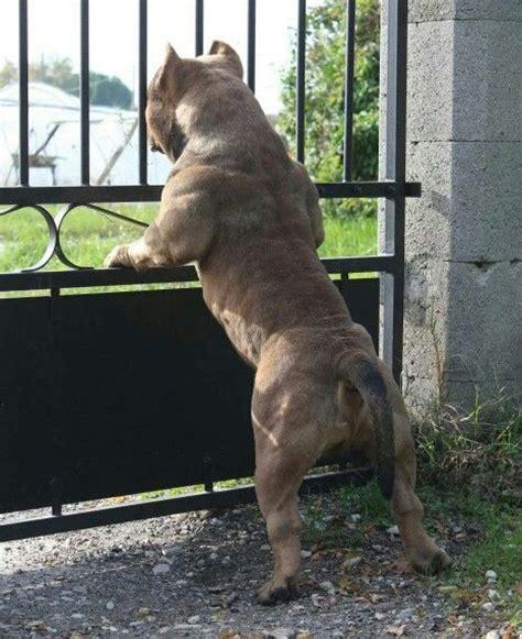 imágenes de animales para whatsapp im 225 genes de perros pitbull para whatsapp fondos