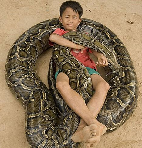 slithering hell! the snakes that eat crocs for breakfast