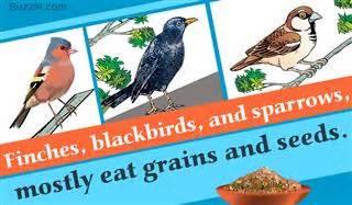 unusual facts about the surprisingly flightless kiwi birds