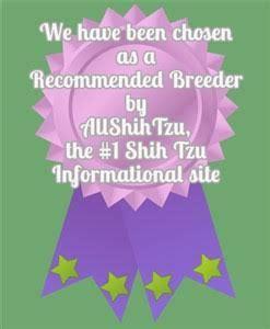 serendipity shih tzu washington shih tzu breeder dogs puppies for sale breed wa