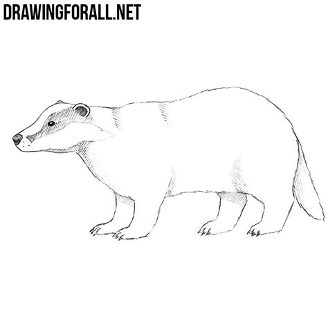 How To Draw A Drawingforall by How To Draw A Badger Drawingforall Net