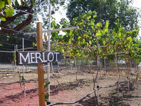 backyard vineyard 28 images setting up a backyard