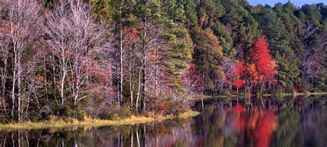 state pictures daingerfield state park texas parks wildlife department