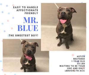 easy  handle affectionate friendly  blue  sweetest