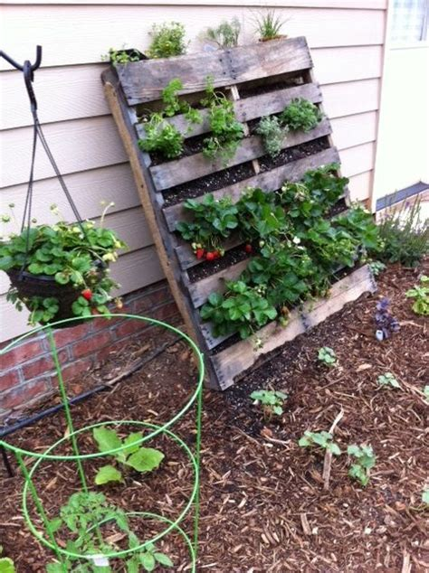 vertical strawberry garden 20 cool vertical