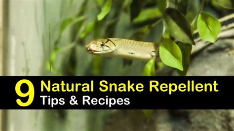 keeping snakes   natural snake repellent tips
