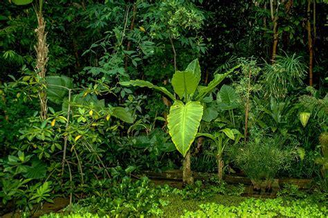 botanischer garten rub wdf wupper digitale fotografie botanischer garten rub
