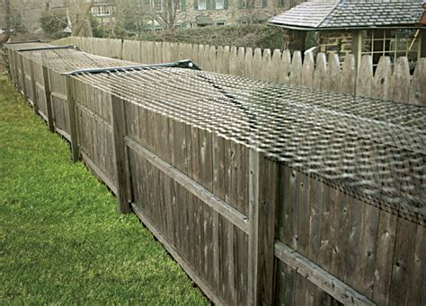 how to keep your cat in the backyard cat proof garden ideas keep your pets inside your backyard