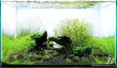 Pupuk Dasar Aquascape Terbaik rockuarium aquascape merawat aquascape