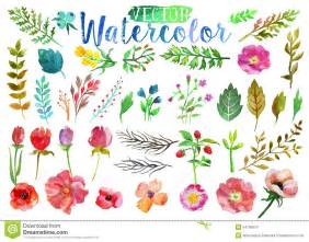 vector watercolor aquarelle flowers and leaves stock