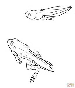 Tadpole Coloring Page tadpole and froglet coloring page free printable