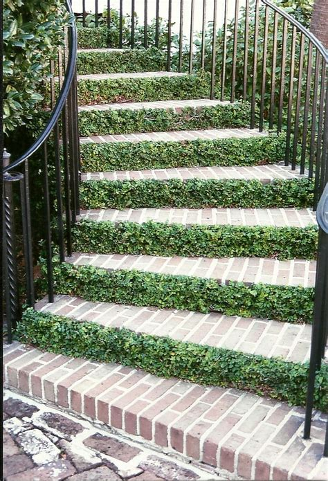outside steps outdoor stairs creeping fig ck birds and bees and