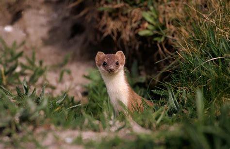 imagenes de animales pequeños las mejores fotos de animales peque 209 os im 225 genes