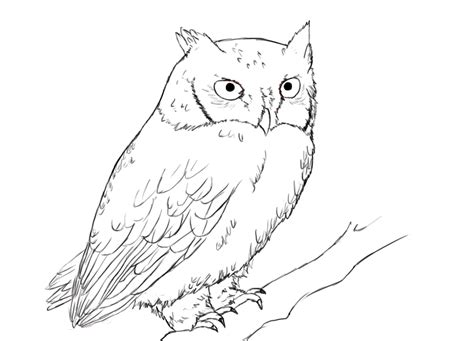how to draw doodle owl draw owls step by step owl how to draw owls