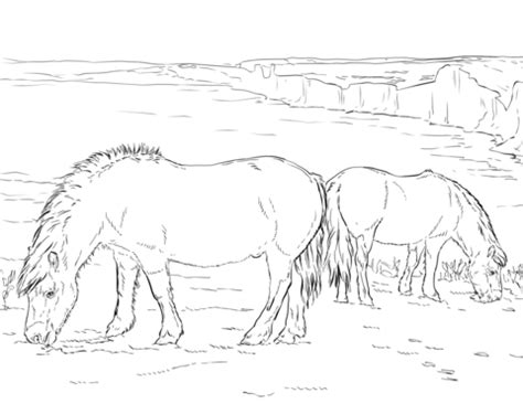 shetland pony coloring pages shetland pony coloring coloring pages