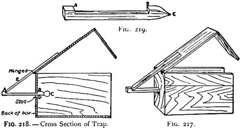 squirrel trapping figure four trap how to build a squirrel trap ency123
