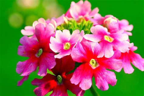 fiori per terrazzo al sole fiori resistono al sole per balcone terrazzo e