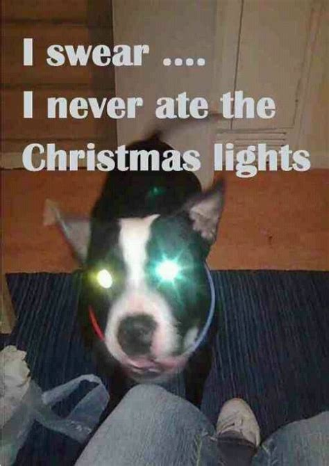 i never ate those christmas lights jokes memes pictures