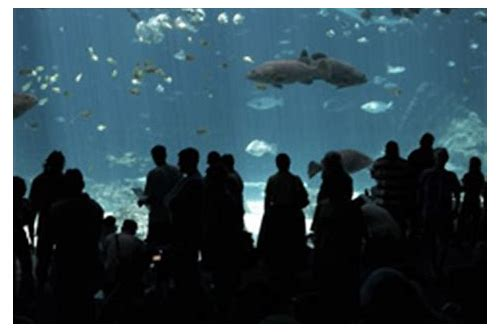 sc aquarium membership coupon
