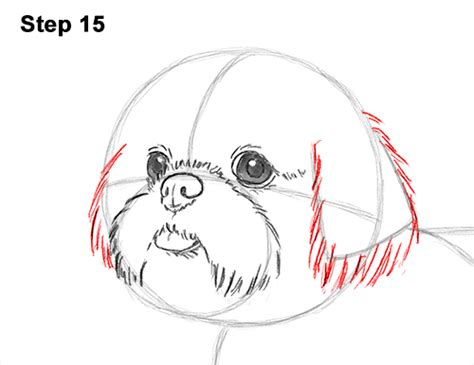 how to draw a shih tzu step by step how to draw a shih tzu step 5 brown hairs