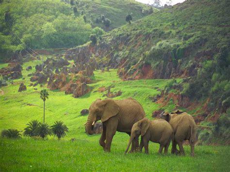 parque cabarceno entradas parque de la naturaleza de cab 225 rceno cab 225 rceno cantabria