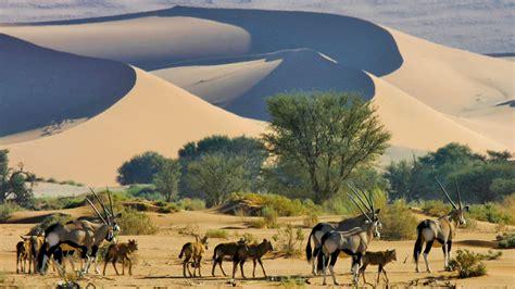 namibia safaris safaris in namibia kuoni
