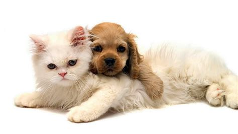 puppy and kitten cuddling cat and cuddling wallpaper hd animals wallpapers