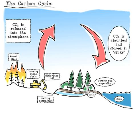 what is a carbon sink 47 carbon sink exles protecting rainforests could
