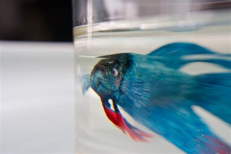 acrylic paint in resin new aquatic wildlife painted in layers of resin by keng