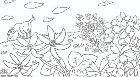 coloring pages field of flowers ぬりえ トカゲ太郎のワンダー ワールド