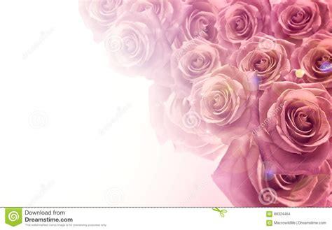 Wedding Background Color by Light Pink Color Background Www Pixshark Images