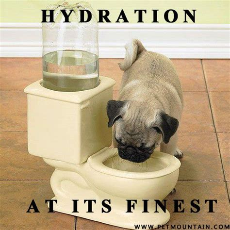 hydration meme animal memes a collection of humor ideas to try