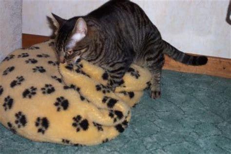 Kater Milchtritt Decke by Kater Beim Milchtritt Erregt Katzen Forum