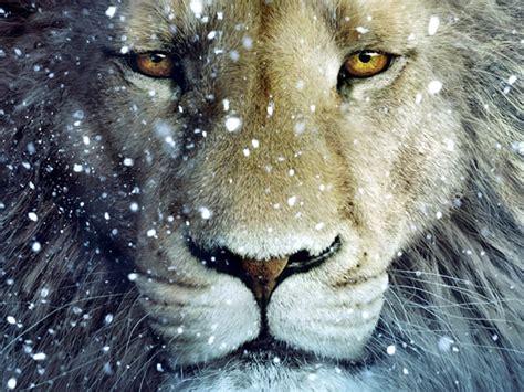 imagenes de leones juntos para perfil whatsapp le 245 es imagens e fotos para facebook pinterest whatsapp