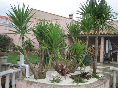 Parterre Avec Palmier by Amenagement Jardin Avec Palmier Beautiful Amenagement