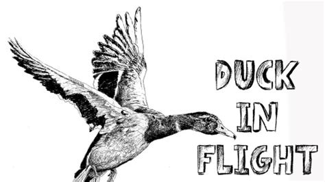 mantide religiosa porta fortuna how to draw a duck in flight in pen and ink