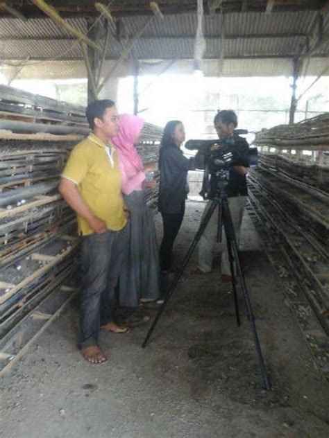 Pakan Ikan Lele Di Pemancingan peternakan puyuh bogor integrasi budidaya puyuh lele
