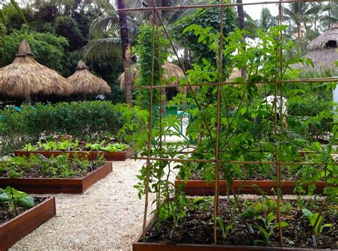 Raised Bed Gardens In Miami Florida Vegetable Garden