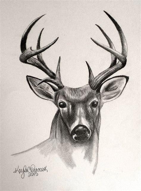 animal drawing sketchbook