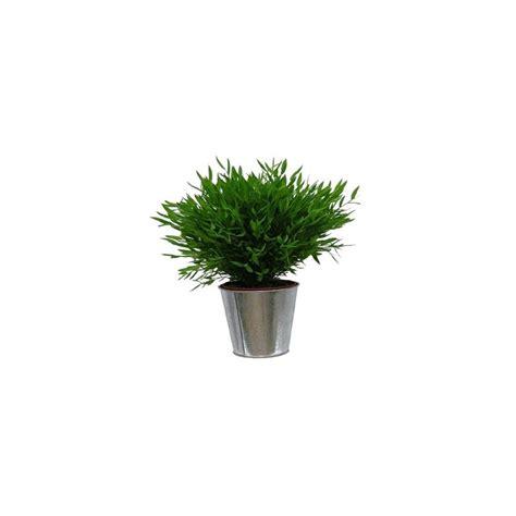 bambou d int 233 rieur cache pot zinc plantes et jardins